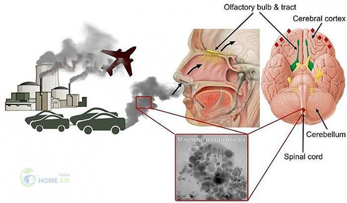 Nguyên nhân gây ô nhiễm không khí và ảnh hưởng đến sức khỏe con người