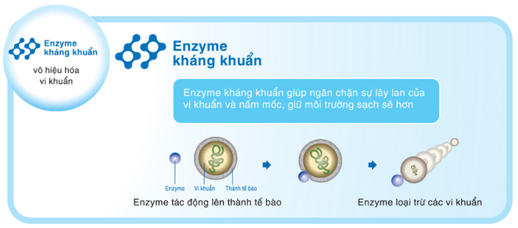 Enzyme kháng khuẩn: vô hiệu hóa vi khuẩn